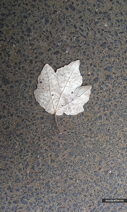 silver leaf soulpatterns